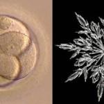Eizellen einfrieren
